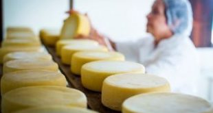 Programa vai beneficiar 60 queijarias artesanais em Sergipe