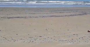 Governo federal libera R$ 2,5 milhões para Sergipe usar na limpeza das praias com óleo
