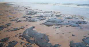 Frente Unificada de Sergipe já recolheu mais de 1 tonelada de óleo do litoral