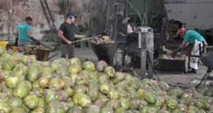 Aease promove oficina sobre o resíduo do coco