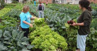 Alimentos orgânicos e o mercado atual