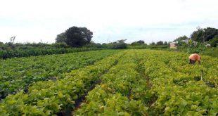 Banco do Nordeste oferece repactuação  emergencial para agronegócio