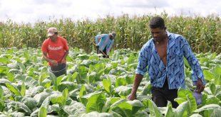 Vinte e cinco mil agricultores sergipanos poderão se inscrever no Garantia-Safra