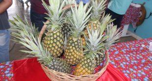 Governo e Maratá se unem para otimizar escoamento da produção de abacaxi em Riachão do Dantas