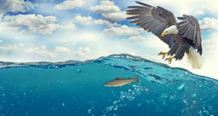 """O investidor tem que ter """"visão de águia"""""""