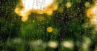 Resistir pela água: por uma literatura viva