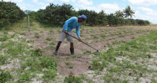Agricultores de cinco municípios recebem R$ 5,4 milhões do Programa Garantia-Safra
