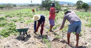 Programa de Aquisição de Alimentos Estadual inscreve agricultores e entidades socioassistenciais até dia 29