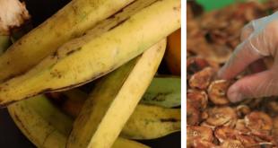 Os benefícios da banana da terra desidratada