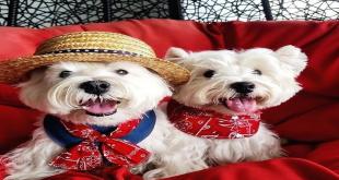 Cães influenciadores na Singapura viralizam no Instagram