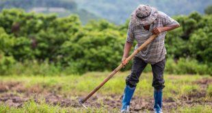 Produtores rurais têm até 30 de novembro para regularizar dívidas com o Banco do Nordeste