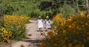 Sergipe tem 168 crianças órfãs da Covid-19